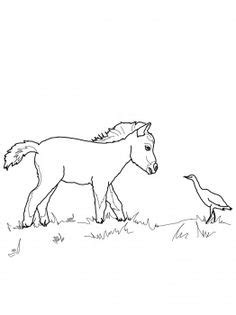 miniature horse coloring page 1000 images about favorite horse colouring pages on