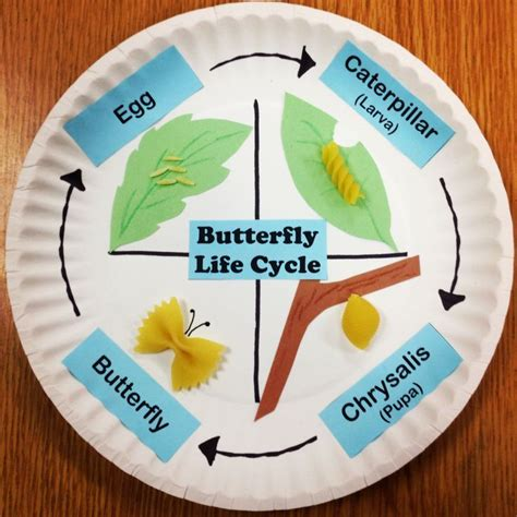 How To Make A Paper Cycle - best 10 butterfly cycle ideas on