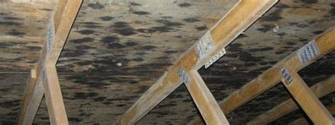 Black Mold In Attic - 7 warning signs your roof is failing and needs repair