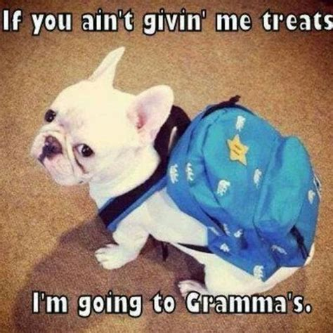 Funny French Memes - 10 best french bulldog memes of all time