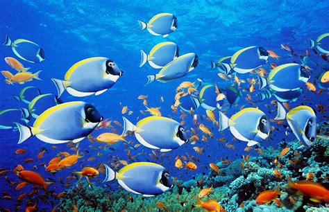 wallpaper colorful fish and interactive water images of fish collection for free download