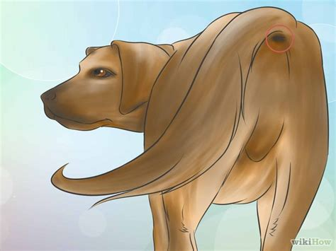 taking dogs temperature how to take a s temperature with pictures wikihow