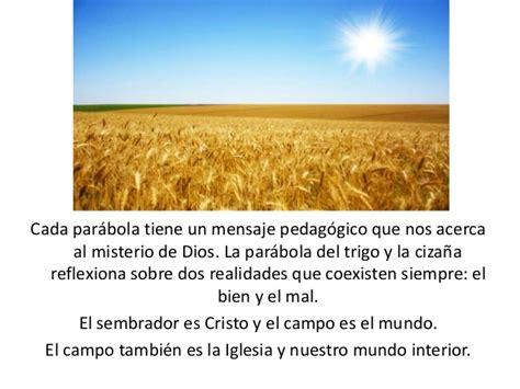 parabola del trigo y la mala hierba youtube 16 domingo ordinario a