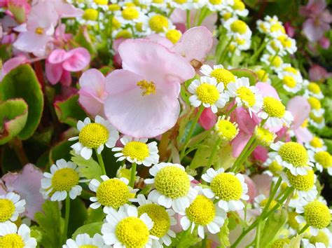 beautiful spring flowers amazing spring flowers wallpapers 521 entertainment world