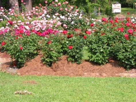 Garden Pictures Ideas Awesome Roses Gardening Ideas Landscaping Gardening Ideas