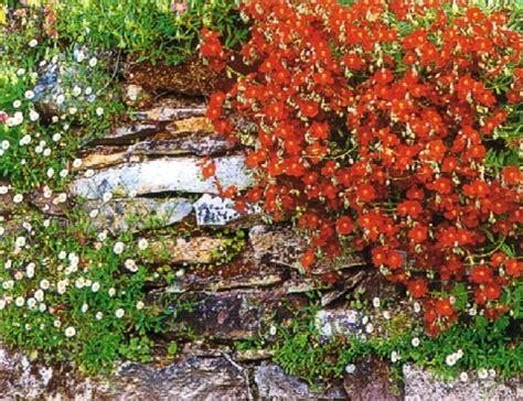 Winterharte Stauden Pflanzen 931 by Winterharte Stauden Pflanzen Winterharte Pflanzen Stauden