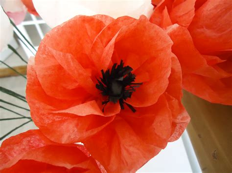 Make Paper Poppies - tissue paper poppy flowers how to make
