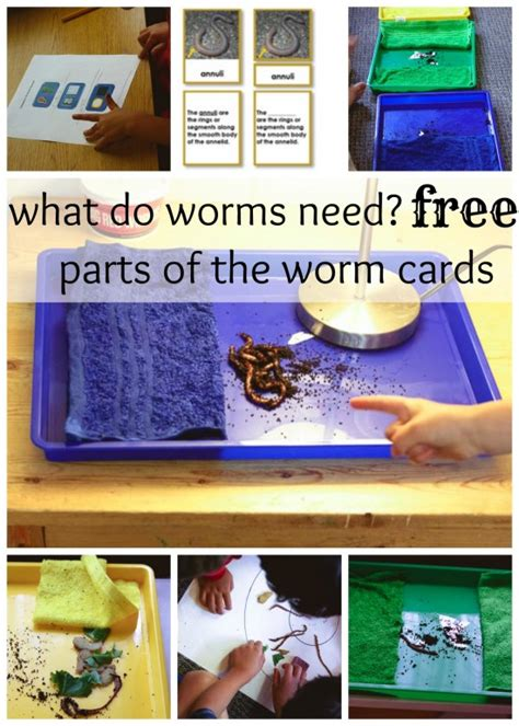 printable montessori work fundamental needs of worms a montessori science work