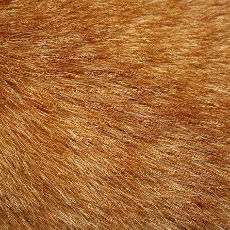 brown fur pattern large