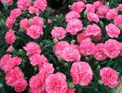 Bouquet Buket Bunga Flanel 12cm Warna Merah Putih Mutiara 1 okcat flower of your month