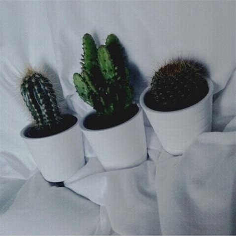 Home Decor Shabby Chic by Cacti On