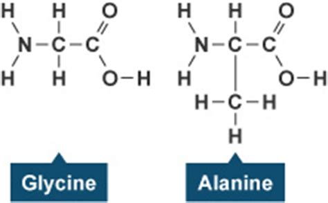protein exles protein chemical makeup mugeek vidalondon