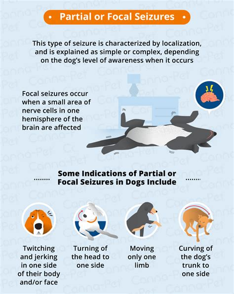 focal seizures in dogs types of seizures in dogs canna pet