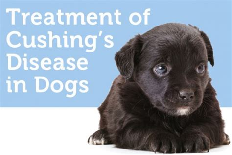 cushings disease in dogs canine cushing s in dogs hubpages