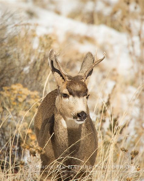 age buck phone pin buck 2560x1600 wallpapers desktop hd and