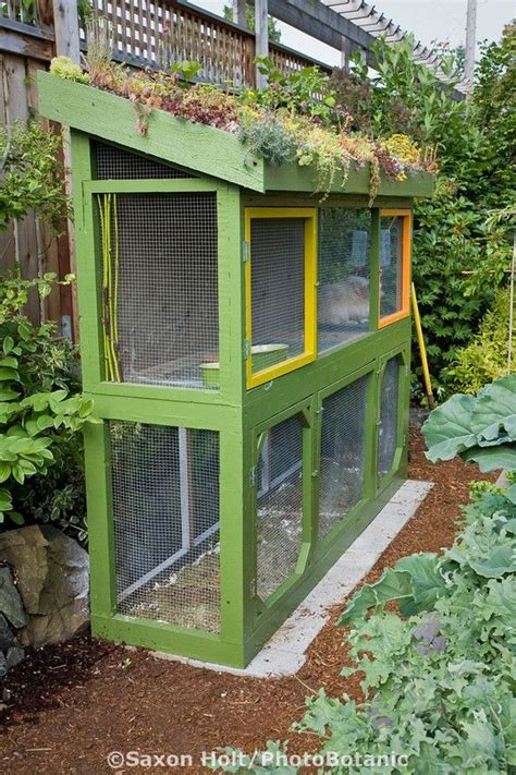 rabbit hutch with greenroof in small backyard sustainable