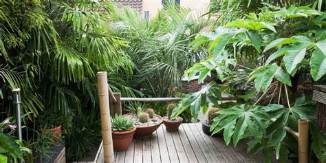 tropical plants   grow   uk garden ideas
