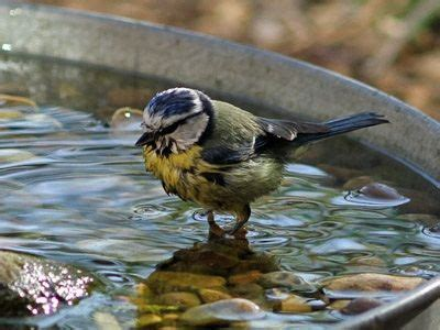 25 best bird baths ideas on pinterest diy bird bath