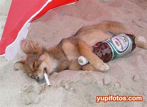 fotos reyes magos borrachos imagenes chistosas de animales taringa