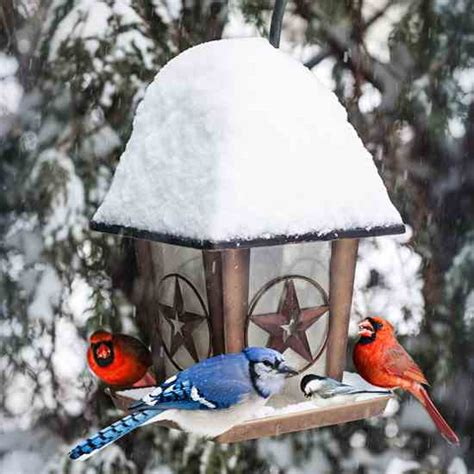 winter bird feeding bringin in the birds nature and