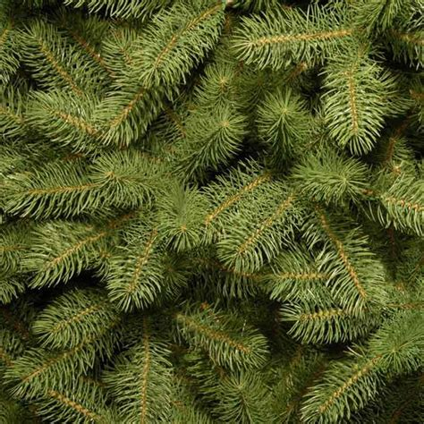 costco feel real bayberry spruce slim christmas treeproduct100293553html bayberry tree my