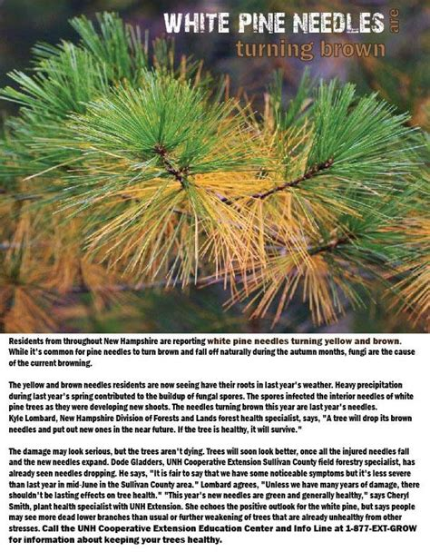 13 best images about plant diseases on pinterest