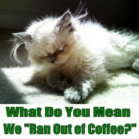 Mean Cat Memes - what do you mean we ran out of coffee angry cat