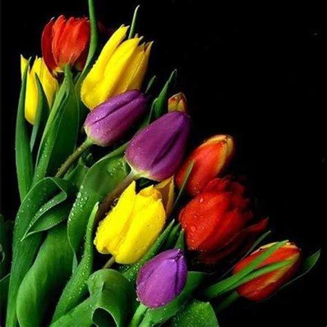 beautiful flowers image 50 plus belles fleurs du monde