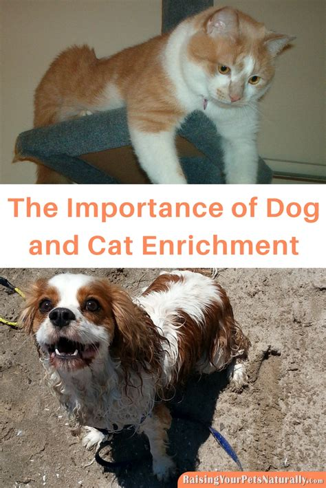 paw order you your pet keep the going with a pet trust books and cat enrichment activities and puzzle toys is key