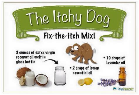 home remedies for dogs skin rashes problems home remedies treating itchy skin allergies in dogs