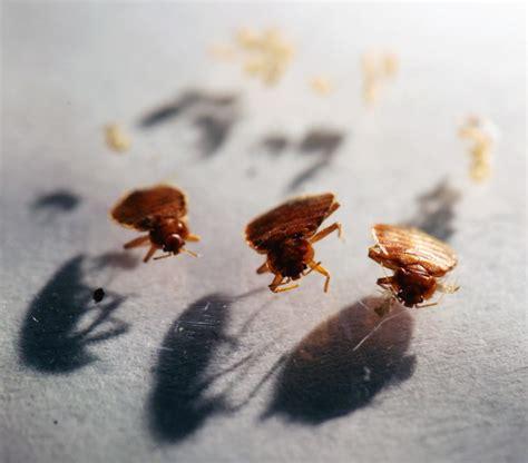 bed bugs columbus ohio bed bug lists puts cleveland columbus cincinnati among