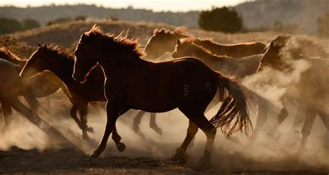 painting workshop horses 65 best horses mustangs images on