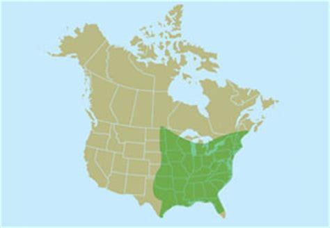 indigo bunting range map indigo bunting delightwild delight