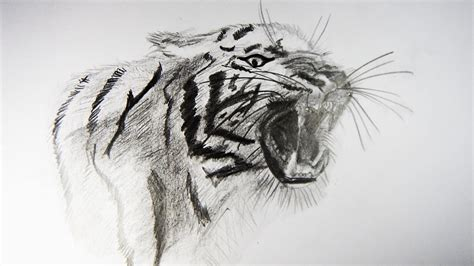 dibujos realistas en lapiz c 243 mo dibujar un tigre realista how to draw a tiger youtube