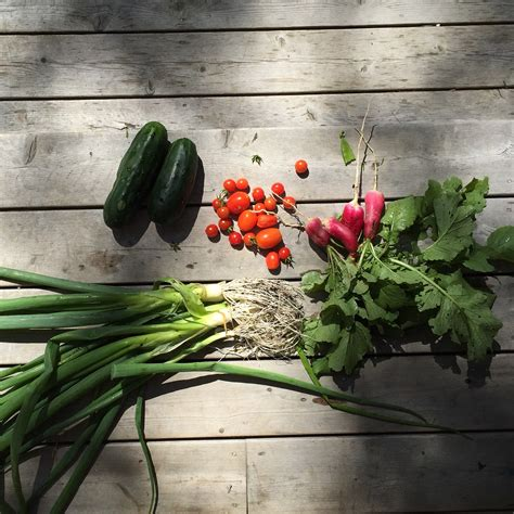 Vegetable Gardening For Dummies by Gardening For Dummies Huffpost