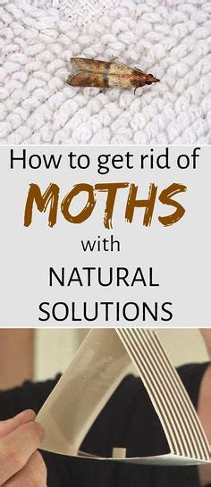How To Get Rid Of Pantry Moths In Your House by To Be Pantry And Moth On