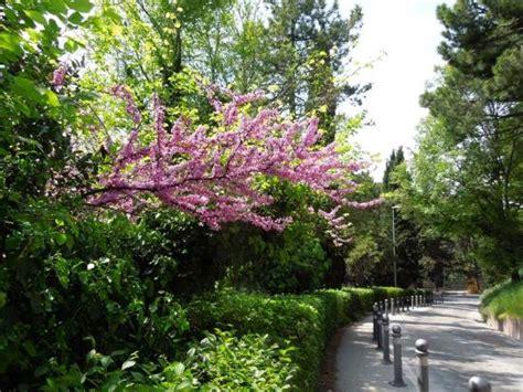 giardini curati giardini curati vicino al centro recensioni su giardini