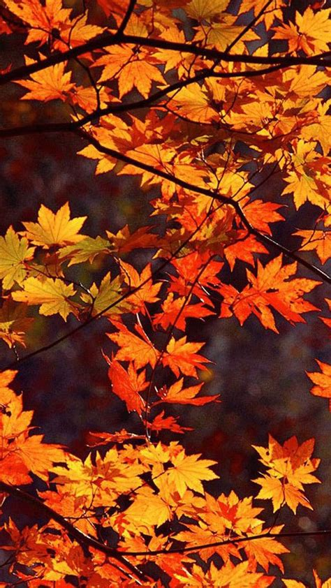 fall backgrounds best 25 fall background ideas on fall