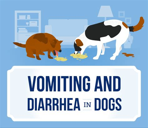 has diarrhea and vomiting vomiting and diarrhea in dogs canna pet