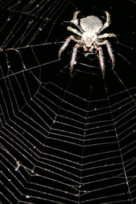 Garden Spider Folklore Spider Legends At Spiderzrule The Best Site In The World