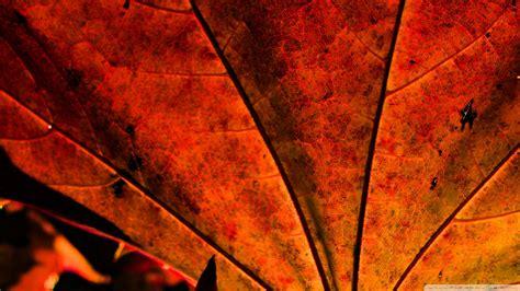 rust colored leaf 2 wallpaper 1920x1080