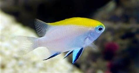Obat White Spot Ikan Hias Laut White Spot Die 30ml jenis ikan hias air laut dunia akuarium