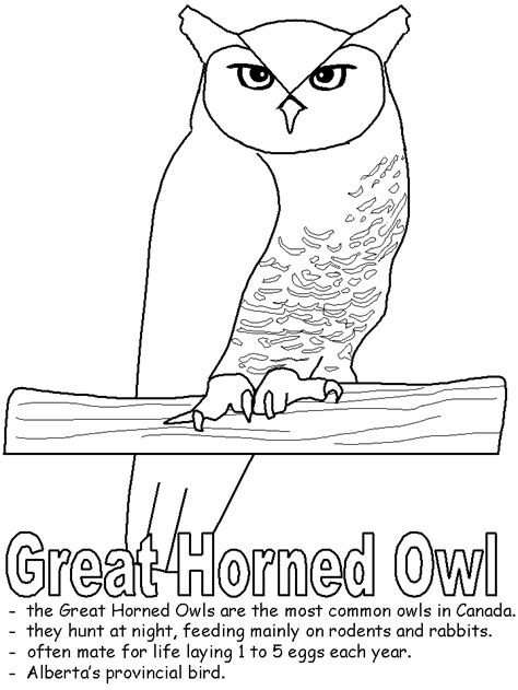 coloring page of great horned owl great horned owl coloring page