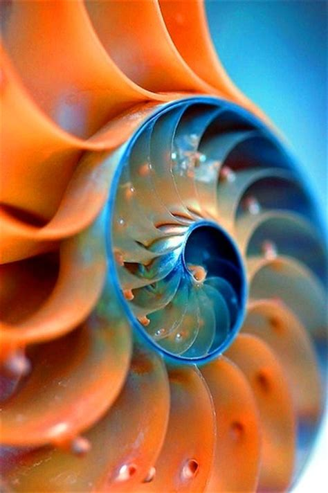 nautilus shell kirlian photograph photograph 25 best spirals ideas on fibonacci sequence
