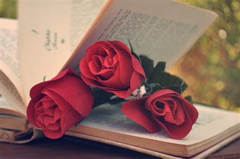 libro the rose and the roses by mintlights on