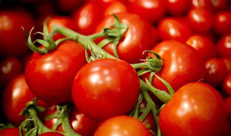 pomodori in vaso coltivare il pomodoro in vaso coltivazione pomodoro in vaso