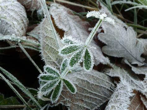 Abdeckung Pflanzen Winter by Wintergem 252 Se Vor Sch 252 Tzen Vieles Kann Lange Im
