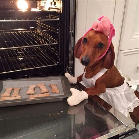 cooking in boxers with chef bailey 50 ways to keep your mate in bed books dachshund baking cookies hair curlers oven mitts apron