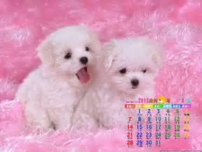 Cute Dogs Wallpapers free cute wallpapers for desktop wallpaper cave