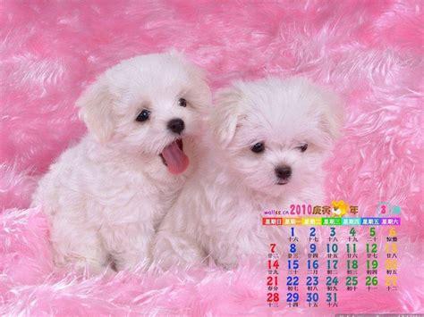 wallpaper free cute free cute wallpapers for desktop wallpaper cave